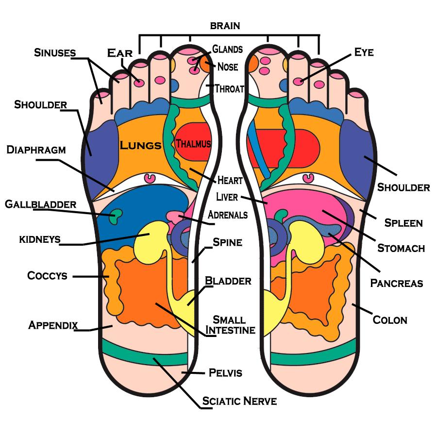 footreflexology