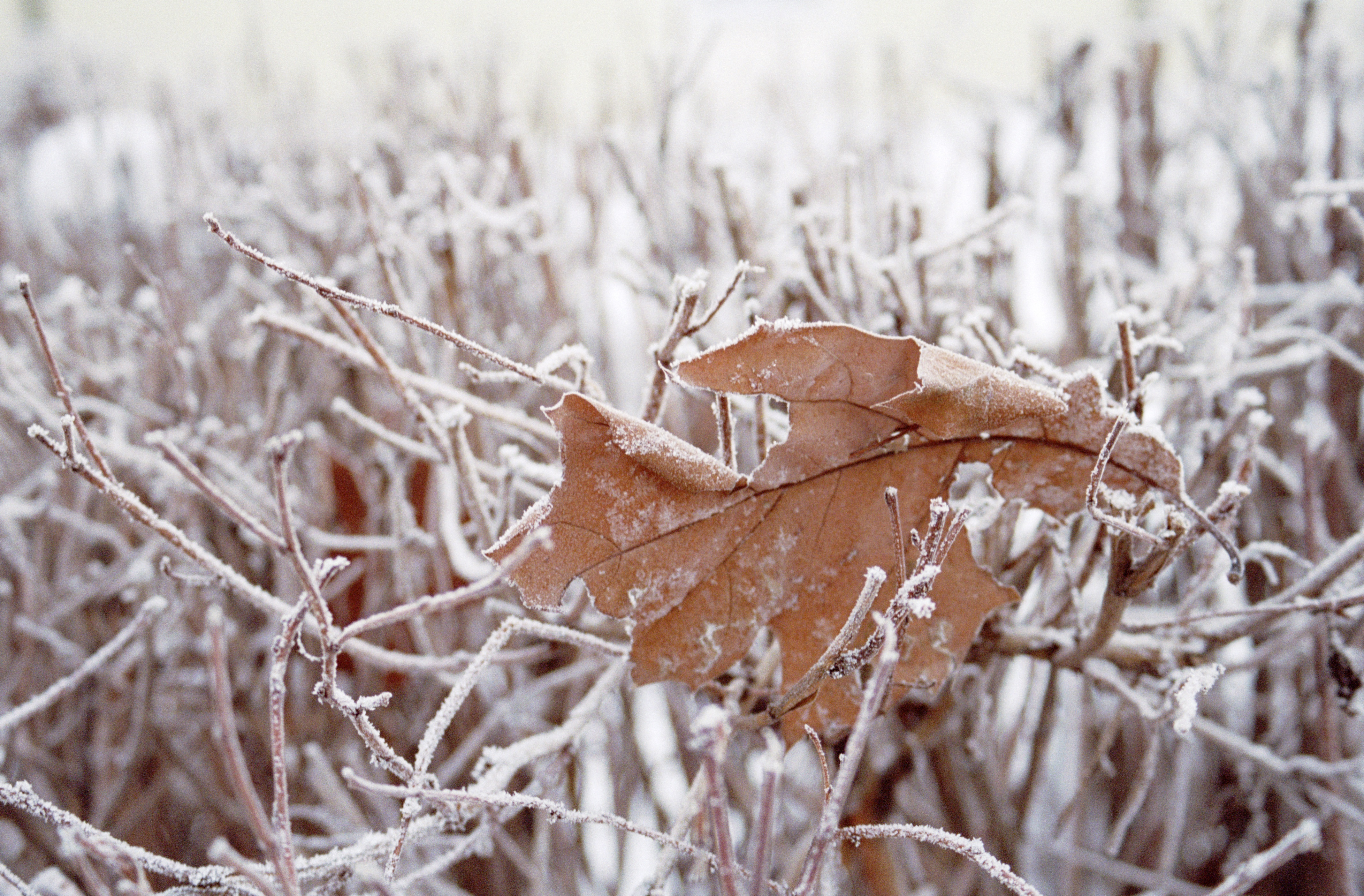 winter_migraines.jpg